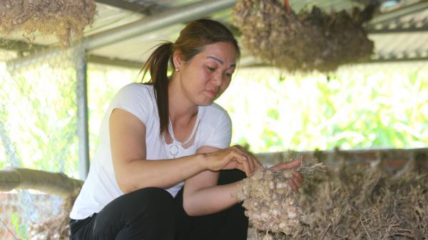 Bắc Kạn: Làm giàu từ nông sản sạch theo mô hình hợp tác xã ở Bạch Thông