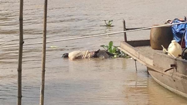 Phát hiện thi thể nam thanh niênquê Thái Bình ở chân cầu