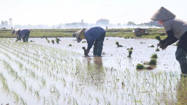Thái Bình: Những con người chật vật mưu sinh trong nắng nóng 40 độ c