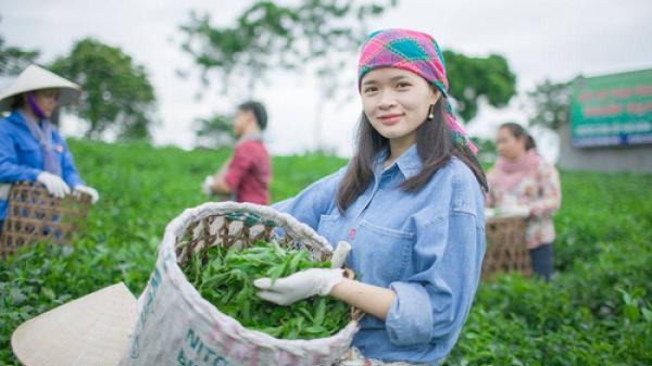 """Cô gái Thái Nguyên làm mát-cha """"made-in Việt Nam"""" từ búp trà Tân Cương thu nhập 150 triệu/tháng"""