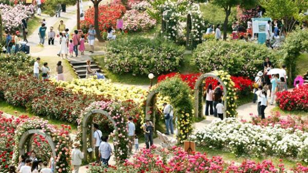 """Ngay gần Thái Nguyên xuất hiện công viên hoa hồng lớn nhất Việt Nam """"đẹp chất ngất"""" sẽ mở cửa từ ngày 2/9"""