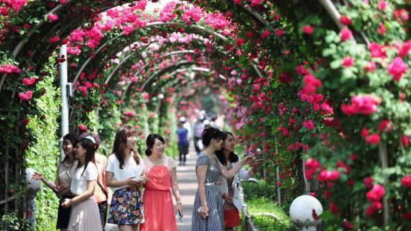 Không xa Thái Bình sắp có công viên hoa hồng rộng 22 ha