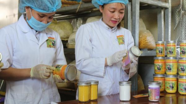 Bắc Kạn: Nữ giám đốc chuyên sản xuất 'vàng ròng' thu tiền tỷ mỗi năm