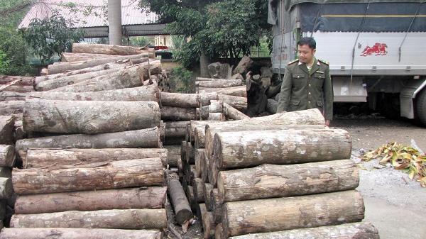 Chợ Mới: Phát hiện, xử lý 29 vụ vi phạm Luật Bảo vệ và phát triển rừng