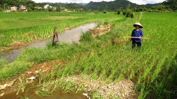 Mưa lũ gây thiệt hại nặng nề về mùa màng ở xã Vi Hương (Bắc Kạn)