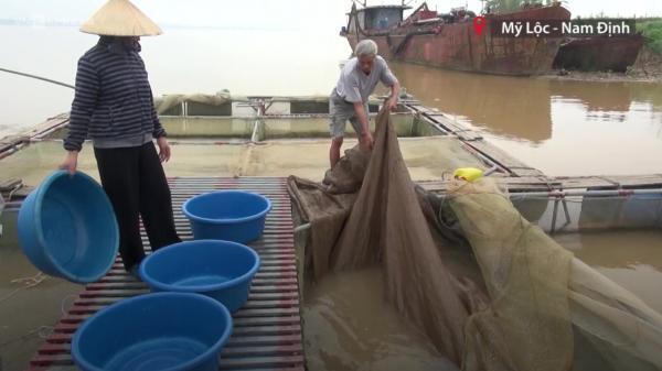Nam Định: Nuôi cá cảnh bên sông Hồng thu tiền tỷ mỗi năm