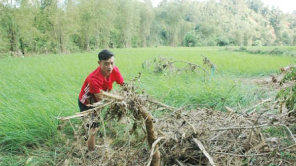 Đại Sảo (Bắc Kạn): Thiệt hại nghiêm trọng do mưa lũ