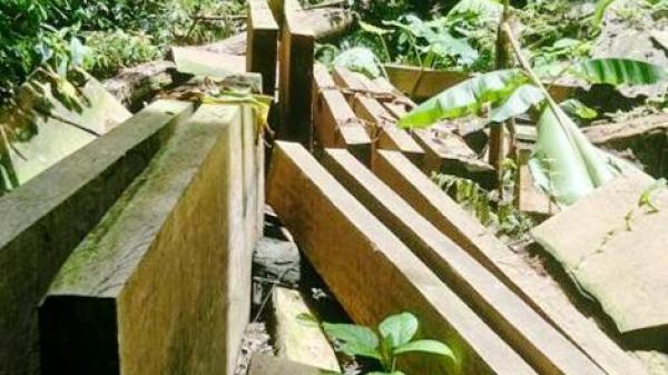 Phát hiện khai thác rừng trái phép ở xã Tân Sơn