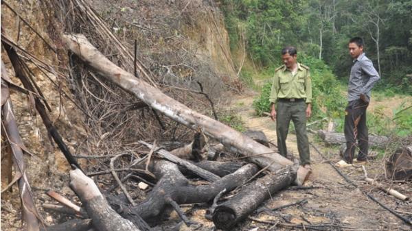 Ngăn chặn tình trạng phá rừng tự nhiên để trồng rừng sản xuất ở Bắc Kạn