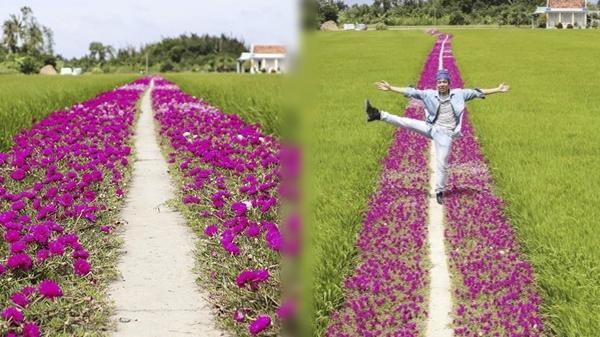 Con đường hoa mười giờ lãng mạn nhất Việt Nam khiến cư dân mạng nước ngoài trầm trồ vì quá đẹp