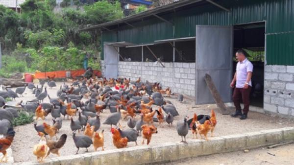 Anh nông dân Bắc Kạn thắng lớn nhờ khởi nghiệp với mô hình chăn nuôi gà thả vườn