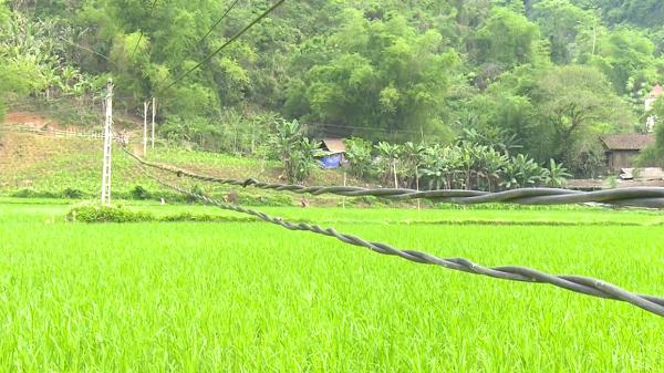 Mất an toàn đường điện trên cánh đồng thôn Pác Liển, xã Nghiên Loan