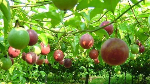 Hướng thoát nghèo mới cho nông dân Bắc Kạn