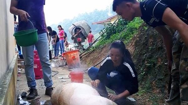 Bắc Kạn: Công ty Nam Huế tích cực giải cứu người nuôi lợn