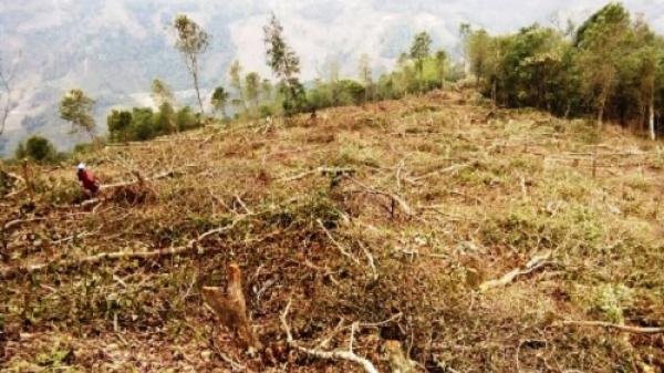 Bắc Kạn: Xử phạt hàng trăm vụ trong lĩnh vực quản lý, bảo vệ rừng