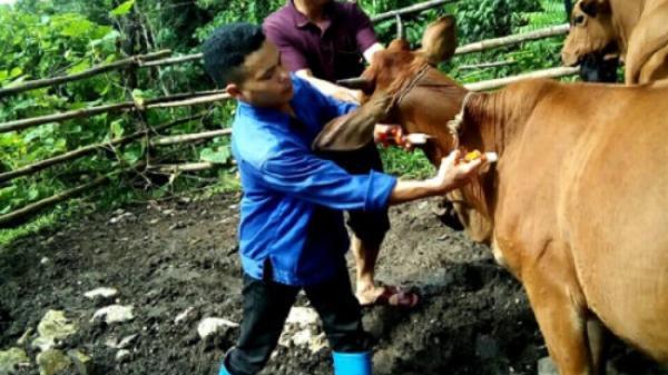 Bắc Kạn: Xuất hiện dịch lở mồm long móng tại huyện Chợ Đồn