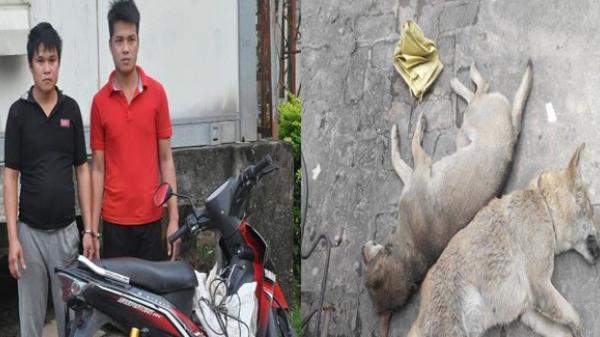 Trộm chó dùng thòng lọng kích điện chống trả lực lượng Công an
