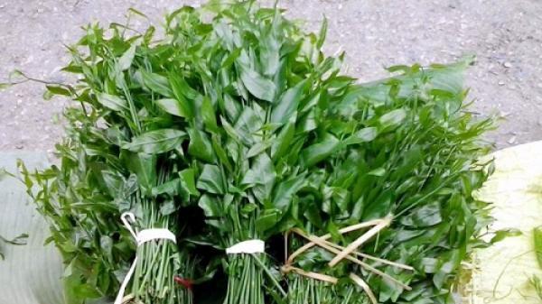 Những tác dụng của cây rau sắng