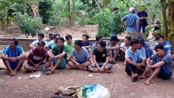 Cảnh sát liên tiếp triệt phá hàng loạt trường gà ở miền Tây