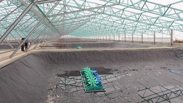 Bạc Liêu sẽ có khu sản xuất tôm trong nhà kính