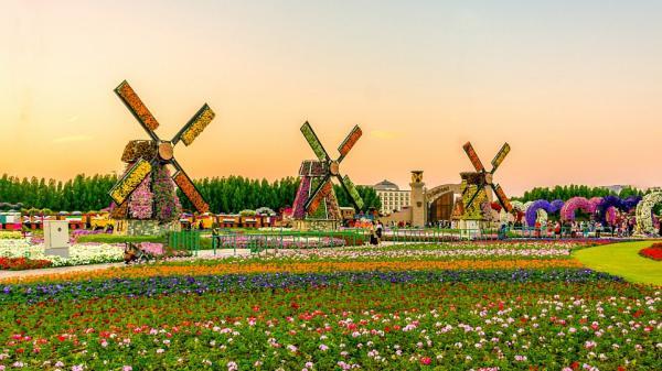 Ngay gần Trà Vinh có một vườn hoa 'khổng lồ' đẹp quên lối về