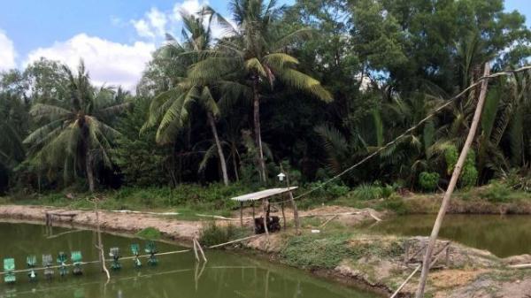 Bạc Liêu: Mất an toàn trong sử dụng điện nuôi tôm công nghiệp
