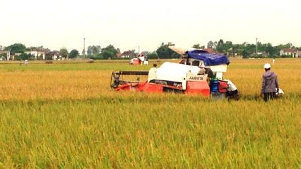 Miền Tây: Tai nạn lao động lúc thu hoạch lúa khiến 1 người tử vong