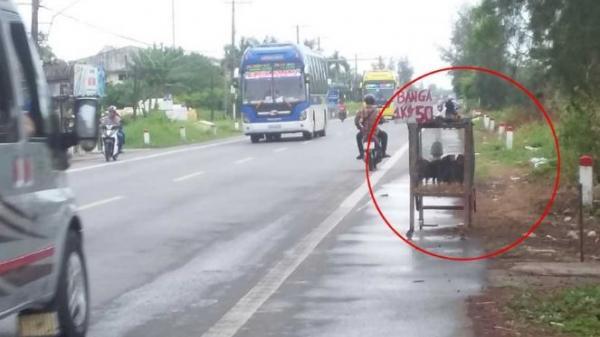 Bạc Liêu: Bày bán gia cầm trên Quốc lộ 1A cản trở giao thông