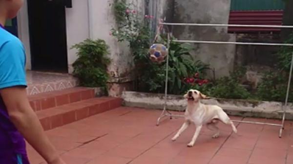 Kinh ngạc chú chó bắt bóng như thủ môn chuyên nghiệp ở Nam Định