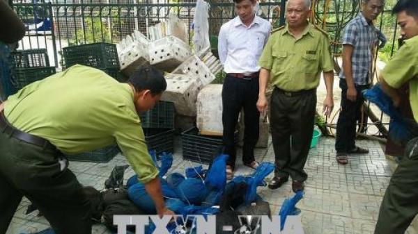 Bắt giữ xe tải vận chuyển gần 340 kg tê tê quý hiếm cho người đàn ông Bắc Ninh