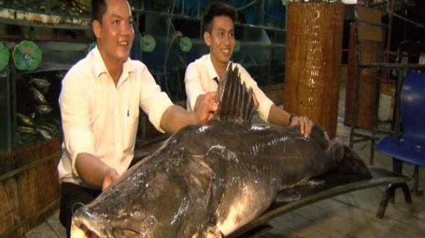 Miền Tây: Bắt được 'thủy quái' cực hiếm trên sông với trọng lượng KHỦNG
