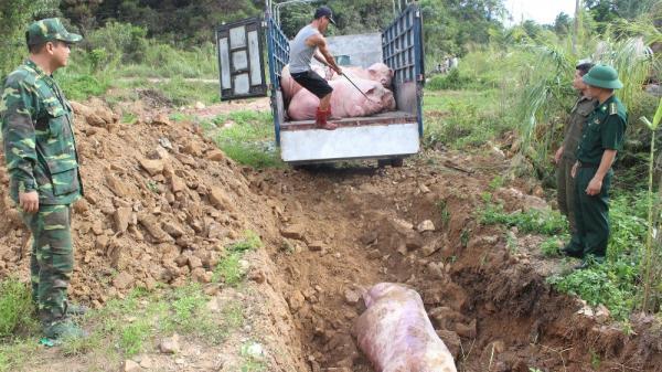 Quảng Ninh: Tài xế trốn sự truy đuổi khi bị phát hiện chở 1 tấn lợn sống nhập lậu