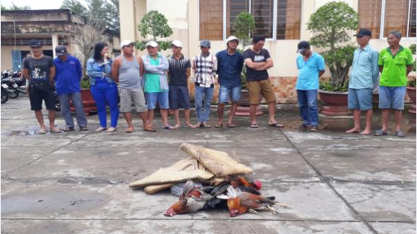 Bắt quả tang nhiều đối tượng đá gà ăn tiền ở Giá Rai (Bạc Liêu)