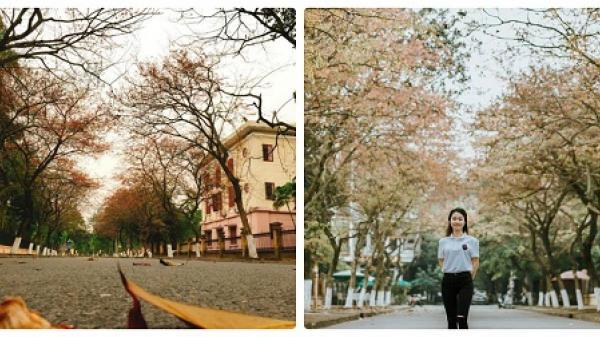 PHÁT SỐT với con đường ngập tràn lá vàng, lá đỏ lãng mạn như phim Hàn tại Bắc Ninh