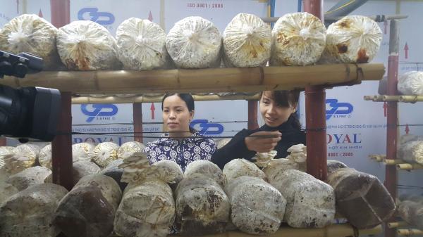 """Bắc Ninh: Đôi vợ chồng cử nhân bỏ """"việc trong mơ"""" về quê trồng nấm"""