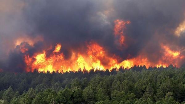 Bắc Ninh: Cháy rừng phòng hộ ở Quế Võ