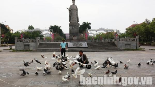 Bắc Ninh: Chim bồ câu- Vẻ đẹp yên bình giữa lòng thành phố