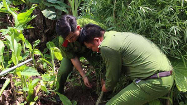 Quảng Ninh: Phát hiện nhà dân trồng cây nghi là cần sa