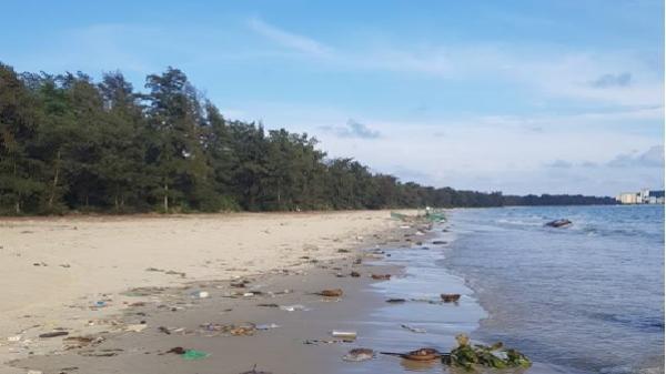 Quảng Ninh: Hàng loạt sam chết dạt vào bãi biển Cô Tô