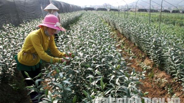 Tiên Du với phong trào nông dân thi đua sản xuất, kinh doanh giỏi