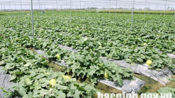 Quế Võ đẩy mạnh ứng dụng công nghệ cao trong sản xuất nông nghiệp
