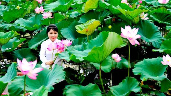 Về Bắc Ninh: Mỗi mùa sen đi qua, là dư âm để lại