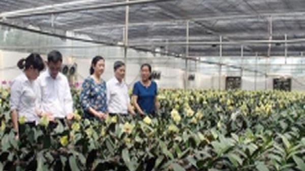 Nông dân Bắc Ninh học tập và làm theo Bác