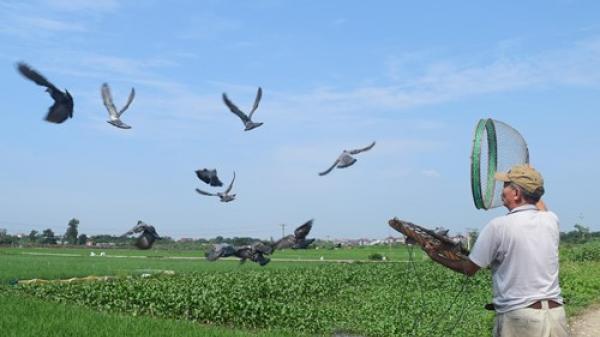 Về thăm ngôi làng cổ ở Bắc Ninh, khám phá hội thi phóng điểu mang ước vọng hòa bình