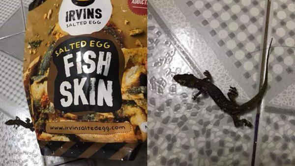 Ăn bim bim da cá đắt đỏ, chàng trai chết điếng khi 'trúng giải độc đắc' thạch sùng nguyên con
