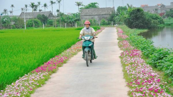 Con đường hoa đâu chỉ có ở miền Tây, những con đường ở Bắc Ninh cũng đang rực rỡ khoe hương sắc