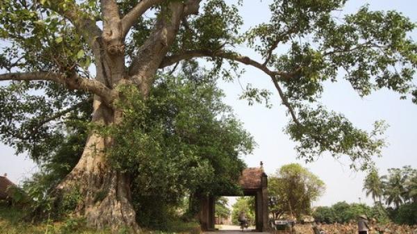 """Gây dựng lại hình ảnh """"cây đa, giếng nước, sân đình"""" của kiến trúc làng Việt"""