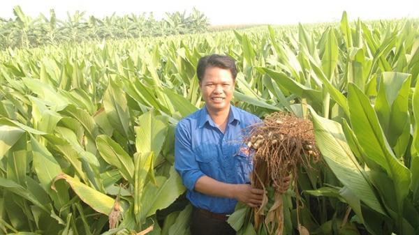 Bắc Ninh: Trở thành đai gia nông nghiệp từ cây nghệ đen
