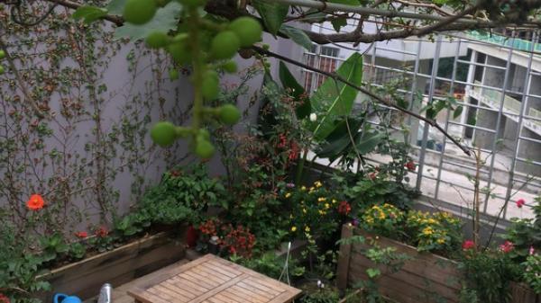 Khu vườn sân thượng trồng cho vui mà cây nào cũng thắm hoa trĩu quả của bà mẹ 8x mát tay