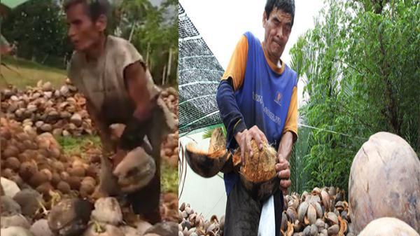 Xót lòng trước hình ảnh người đàn ông mù ở Bến Tre lột dừa khô mướn bên chiếc dao sắt nhọn